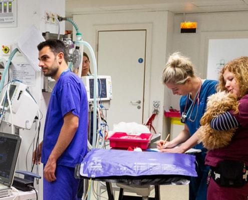 Clinica veterinaria Almeria Panda - Veterinario urgencias Almeria