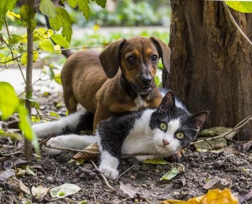 Veterinario Almeria -Enfermedades perros y gatos: alergias.