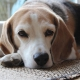 Veterinario Almeria -Enfermedades perros y gatos: artrosis.