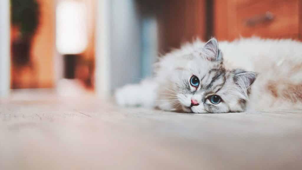 Veterinario Almeria -Enfermedades perros y gatos: cistitis.