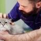 Veterinario Almeria -Enfermedades perros y gatos: colangitis.