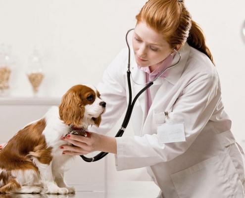 Veterinario Almeria -Enfermedades perros y gatos: corazon.