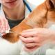 Veterinario Almeria -Enfermedades perros y gatos: diabetes.