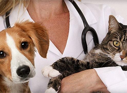 Clinica veterinaria Almeria Panda - Gatos - Enfermedades en perros y gatos