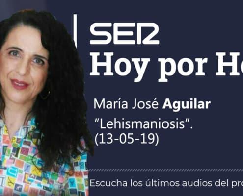Panda Clinica Veterinaria Almeria. Lehismaniosis.